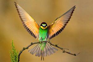 bird wallpaper free A10