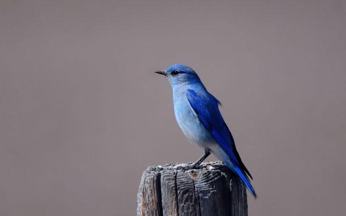 bird wallpaper free A3