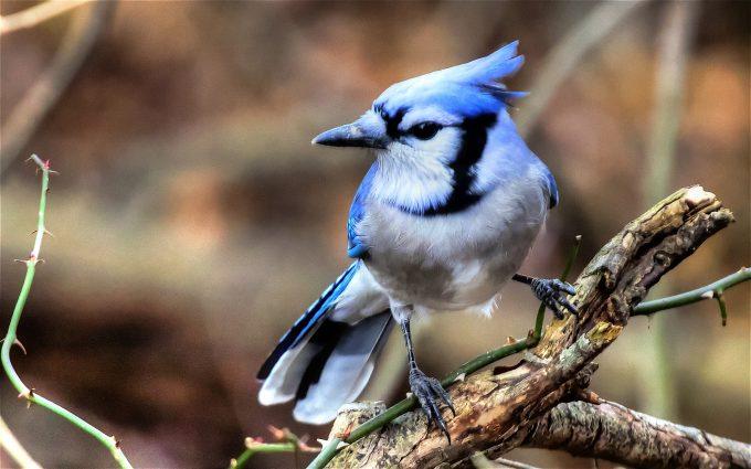 bird wallpaper free A6
