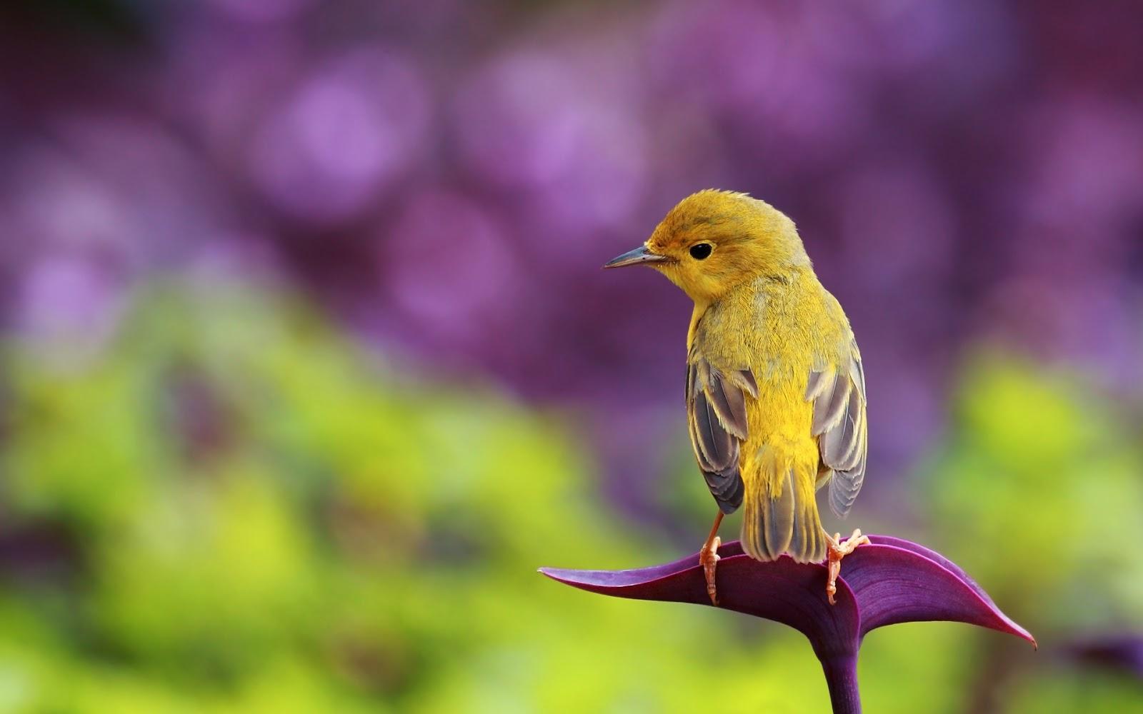 bird wallpaper free A7