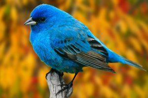 bird wallpaper free A8
