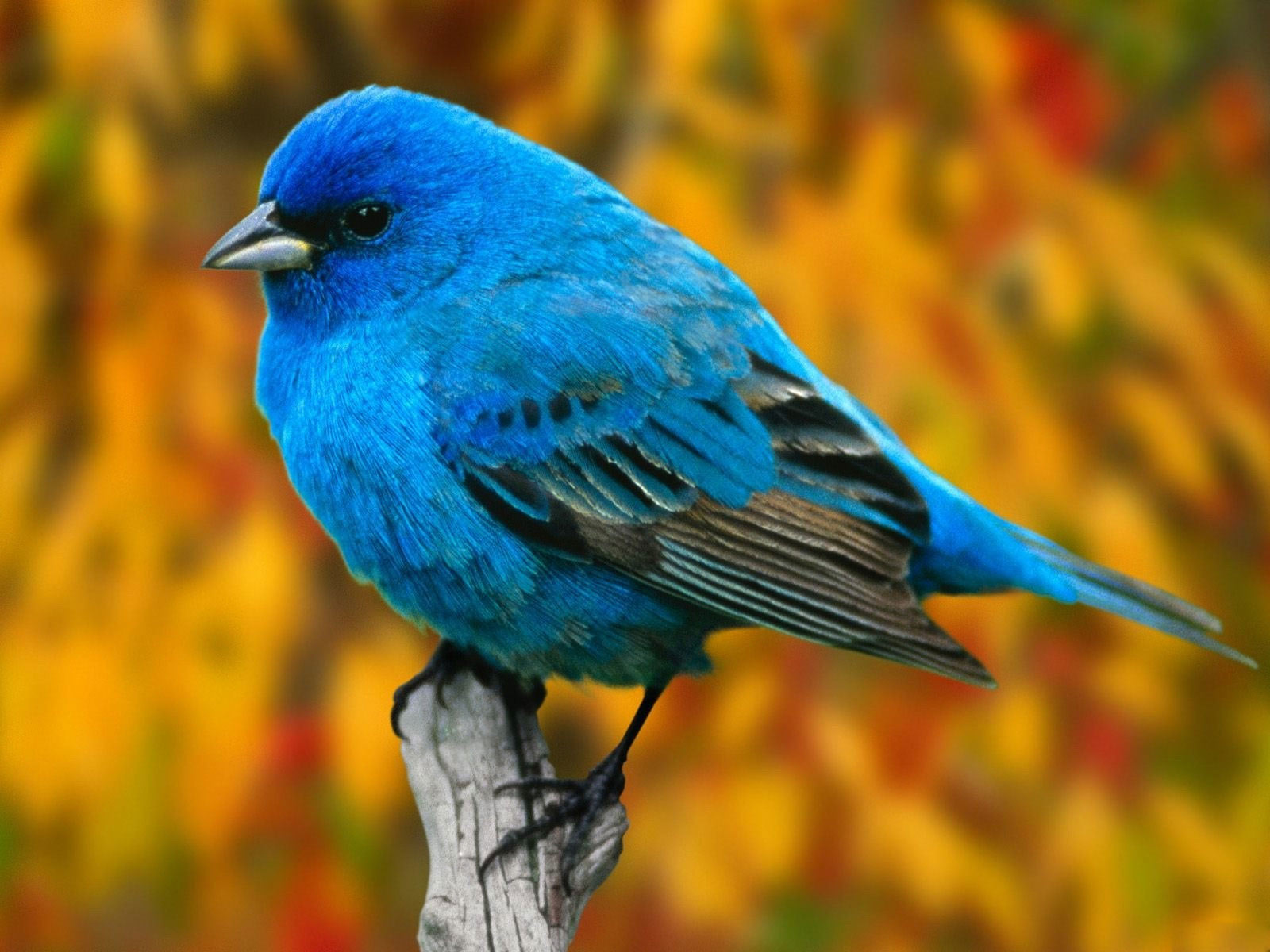 bird wallpaper free A8