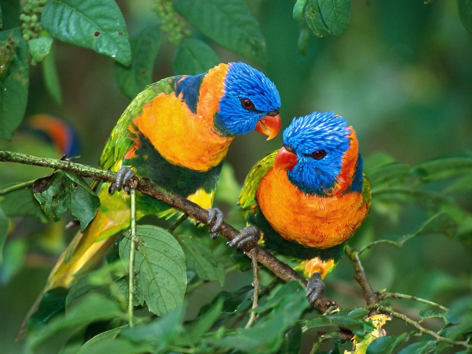 bird wallpaper free A9