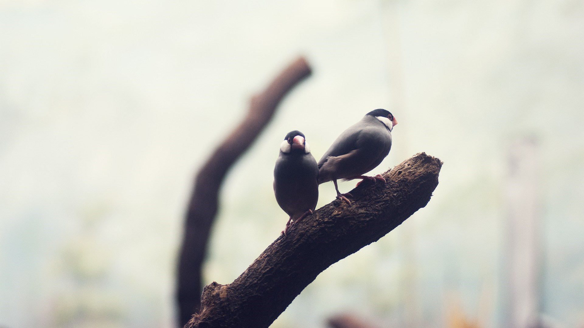 birds free images