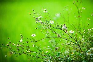 birds images A1