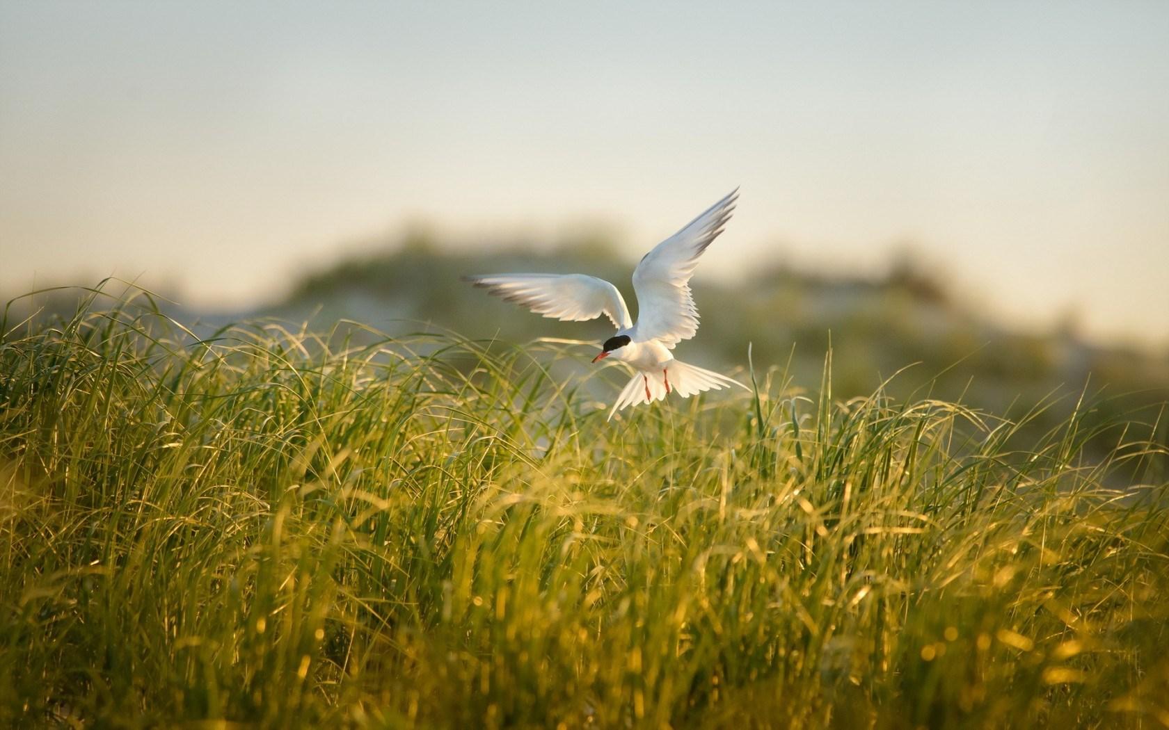 birds images A2