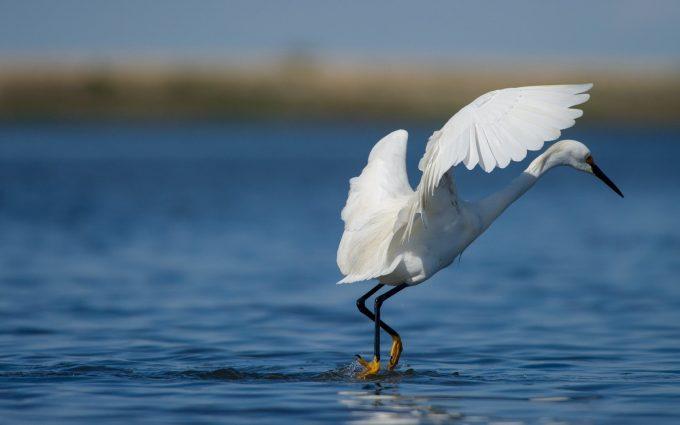 birds images A3