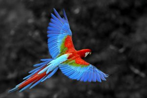 birds images hd
