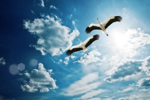 birds nature wallpaper