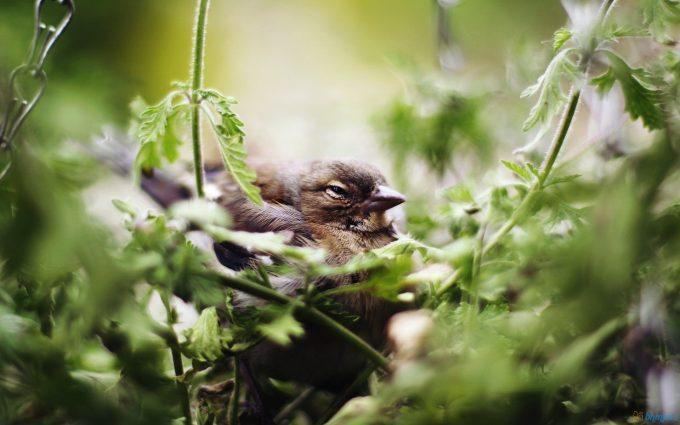 birds photos free