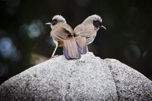 birds pictures hd
