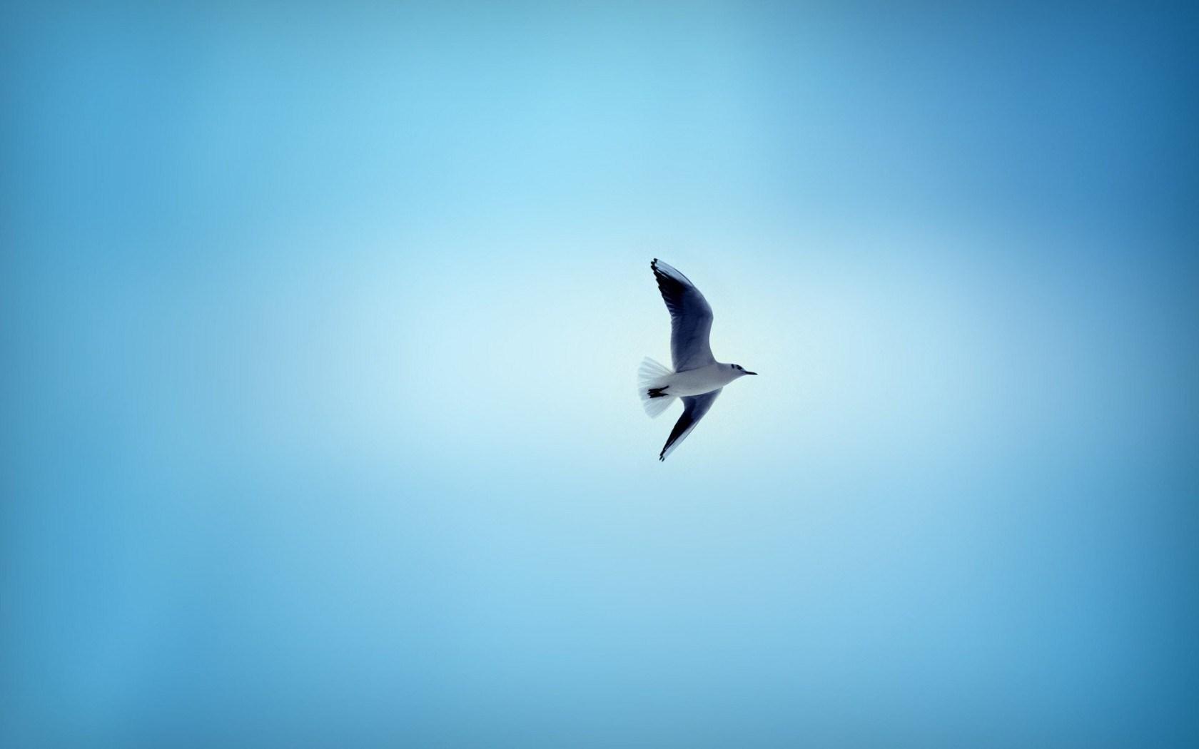 birds sky