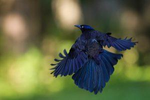 birds wallpaper hd