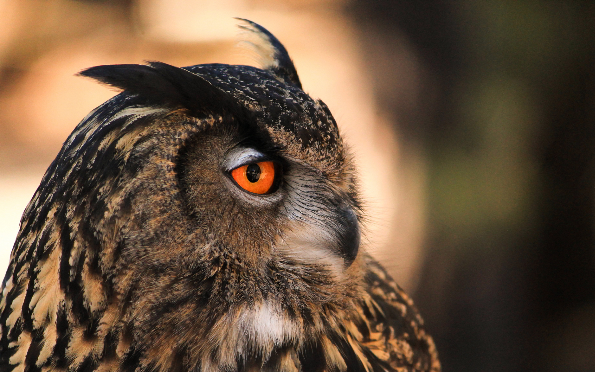 black and white owl wallpaper - HD Desktop Wallpapers   4k HD