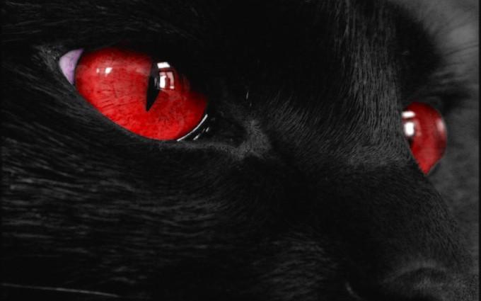 black cat eyes hd