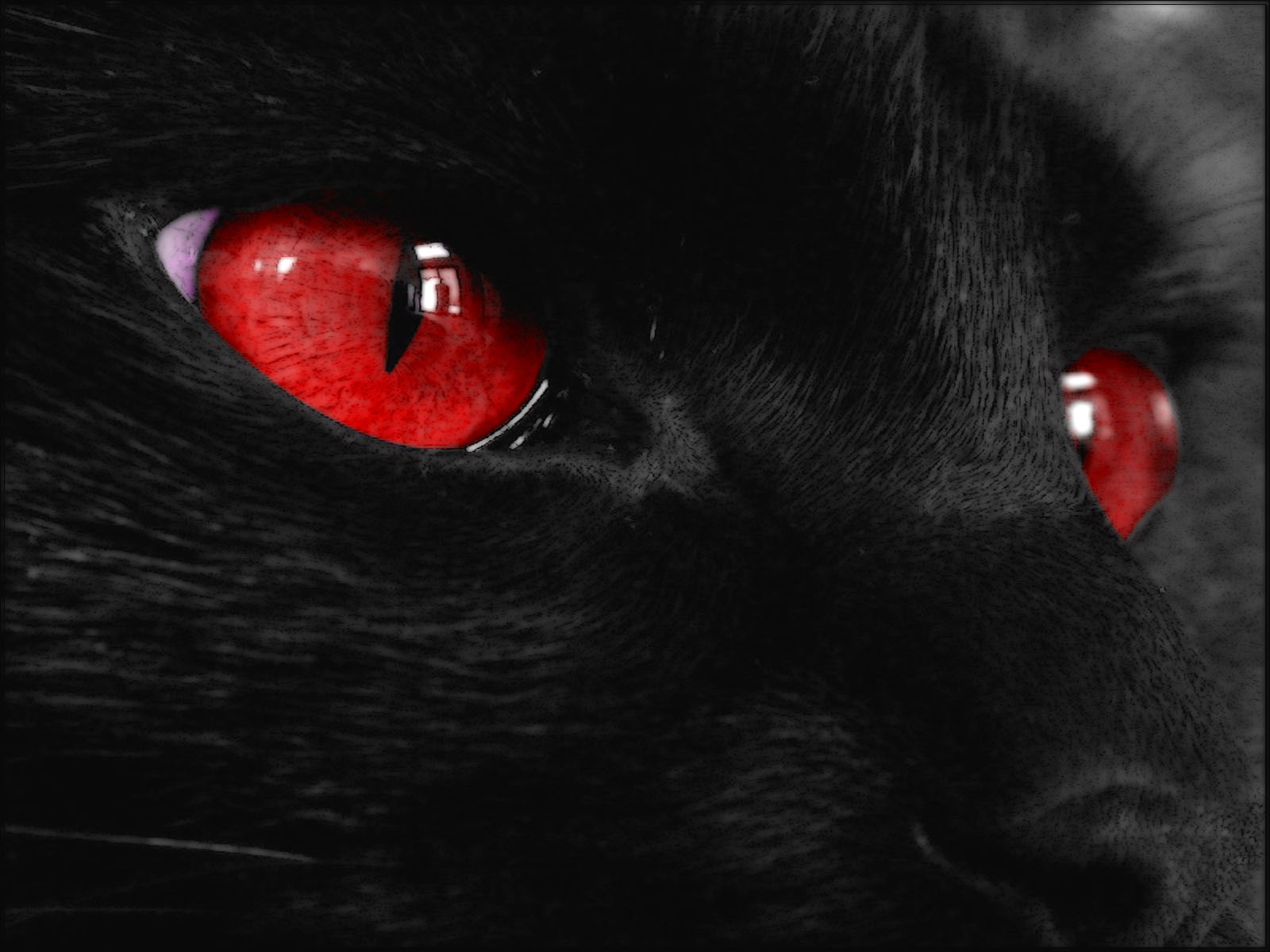 black cat eyes hd