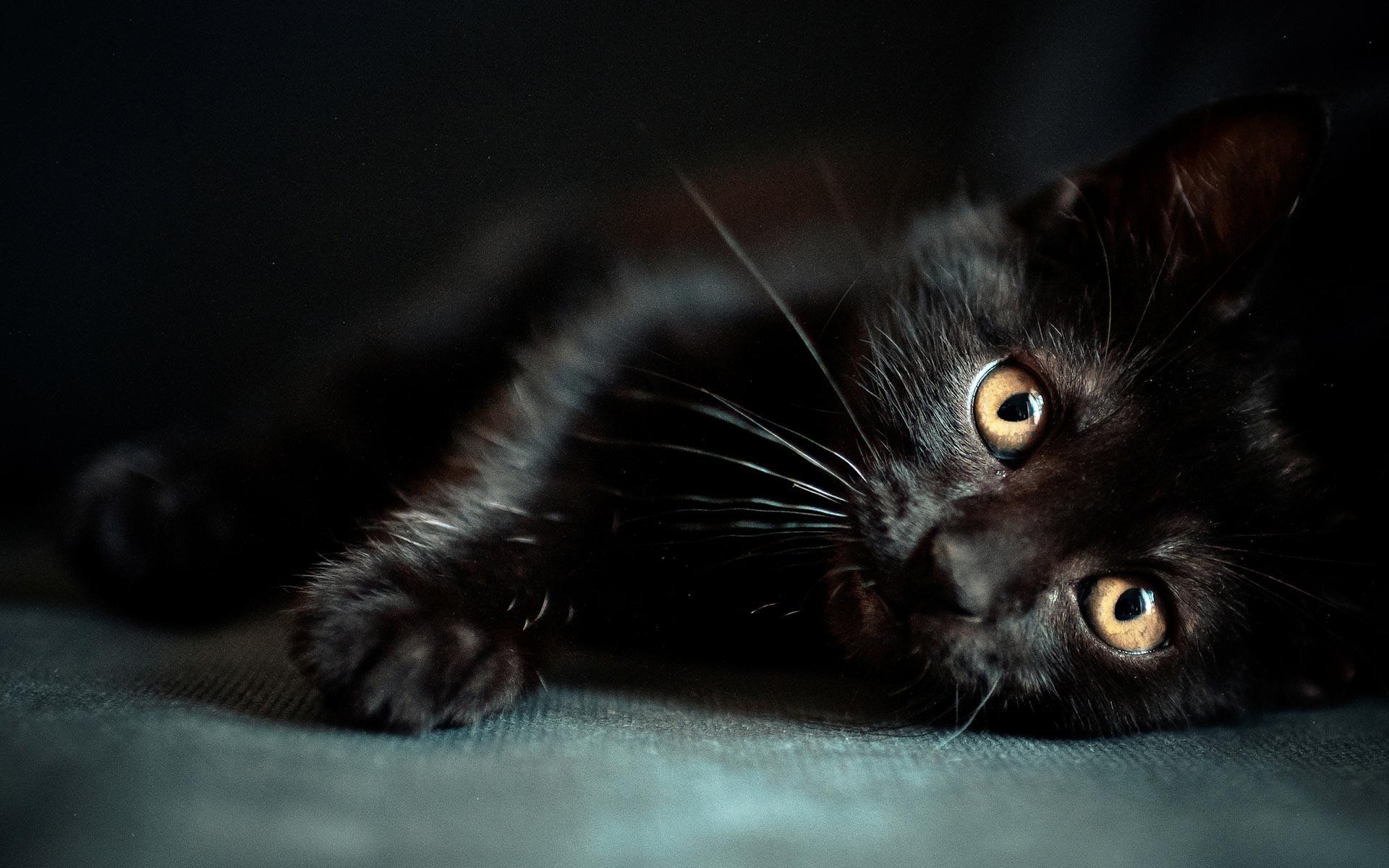 black cat home