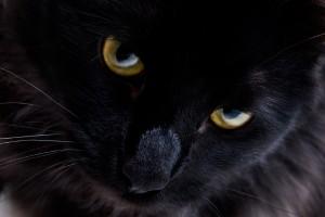 black cat kitty