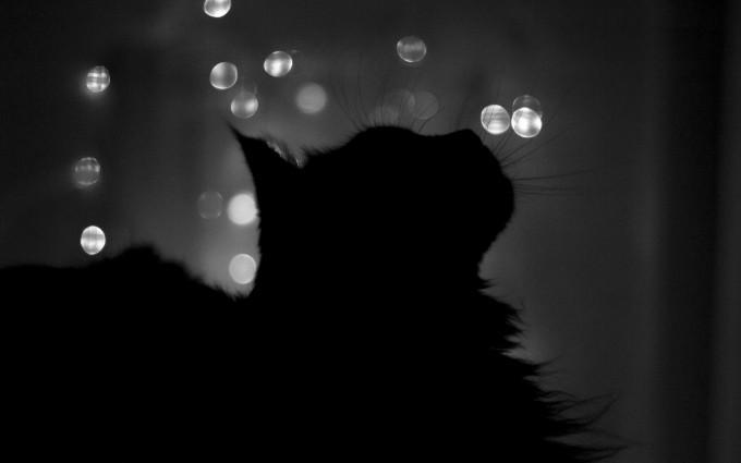 black cat photos