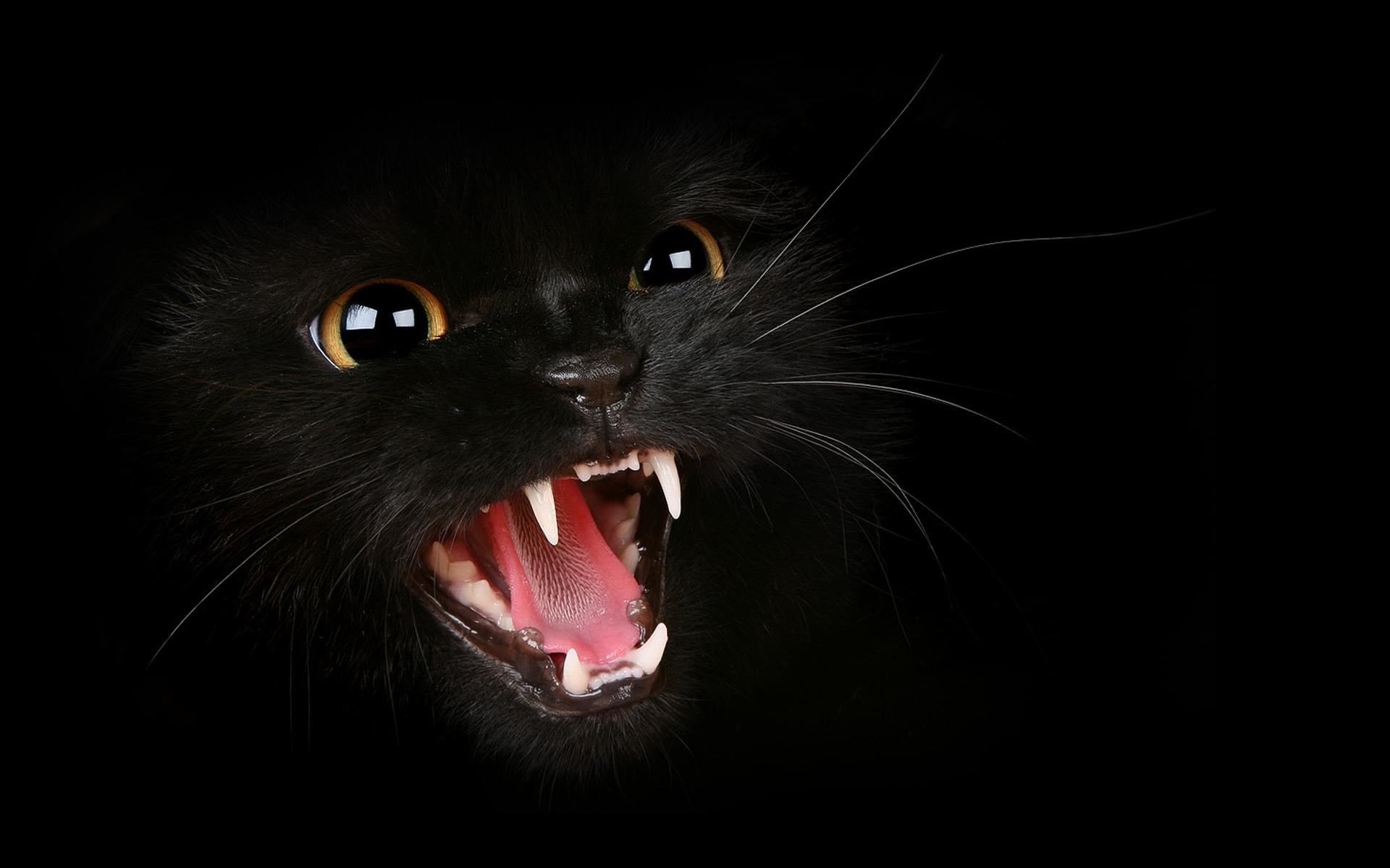 black cat scary