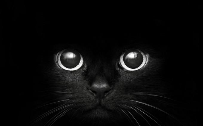 black cat sweet