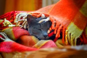 black cat wallpapers download