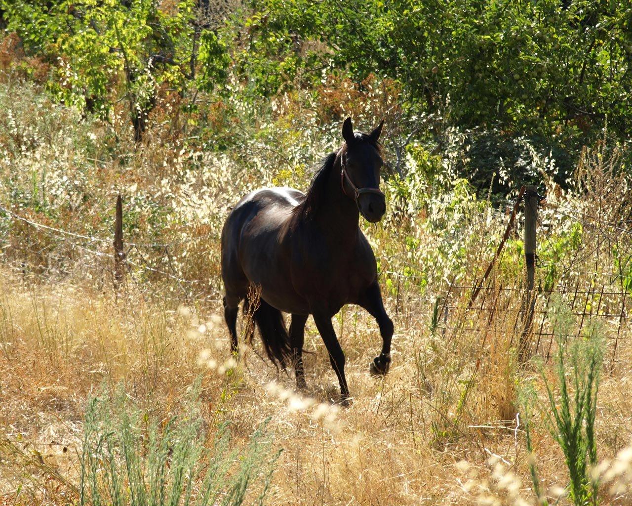 black horse wild