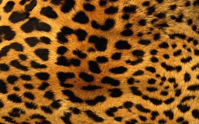 black leopard print wallpaper