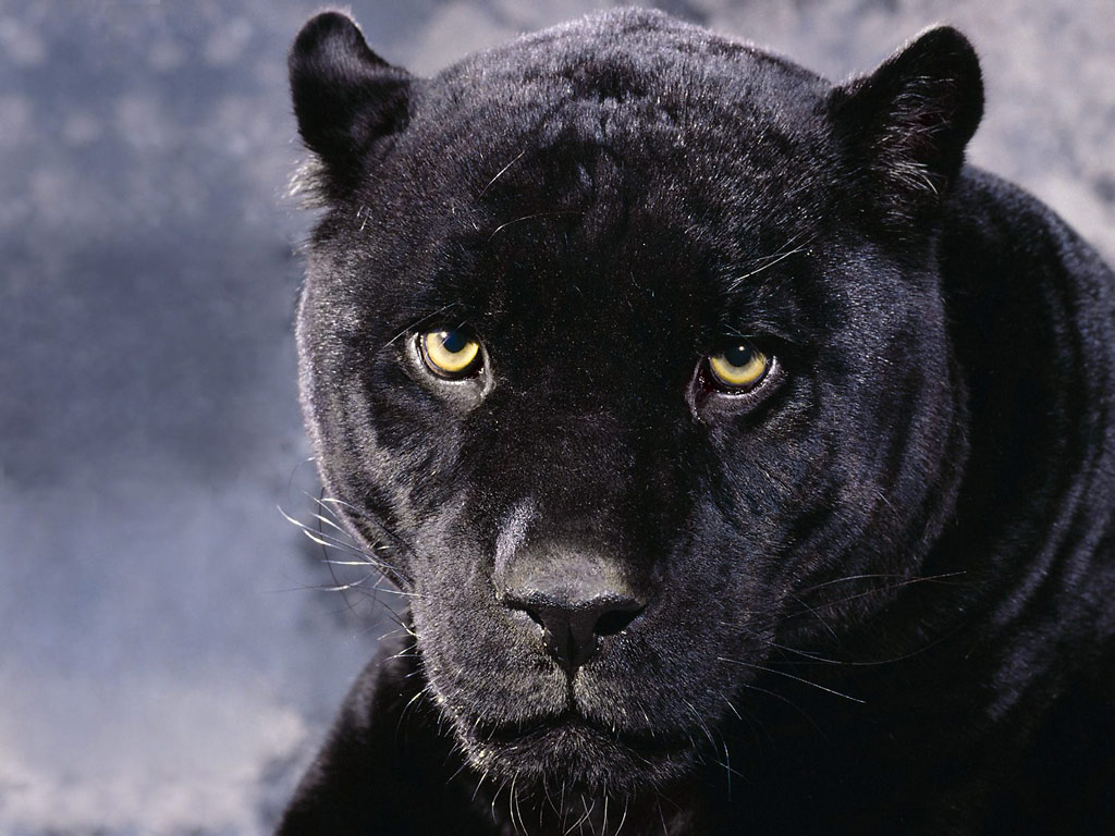 black panther look