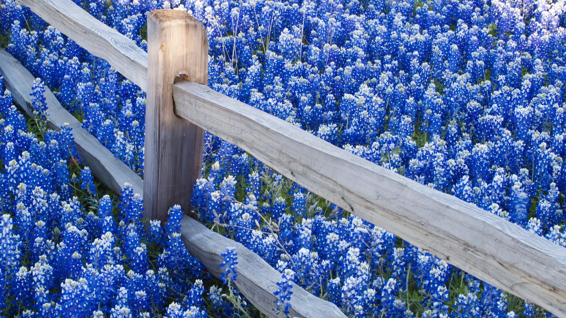 blue wallpaper flowers