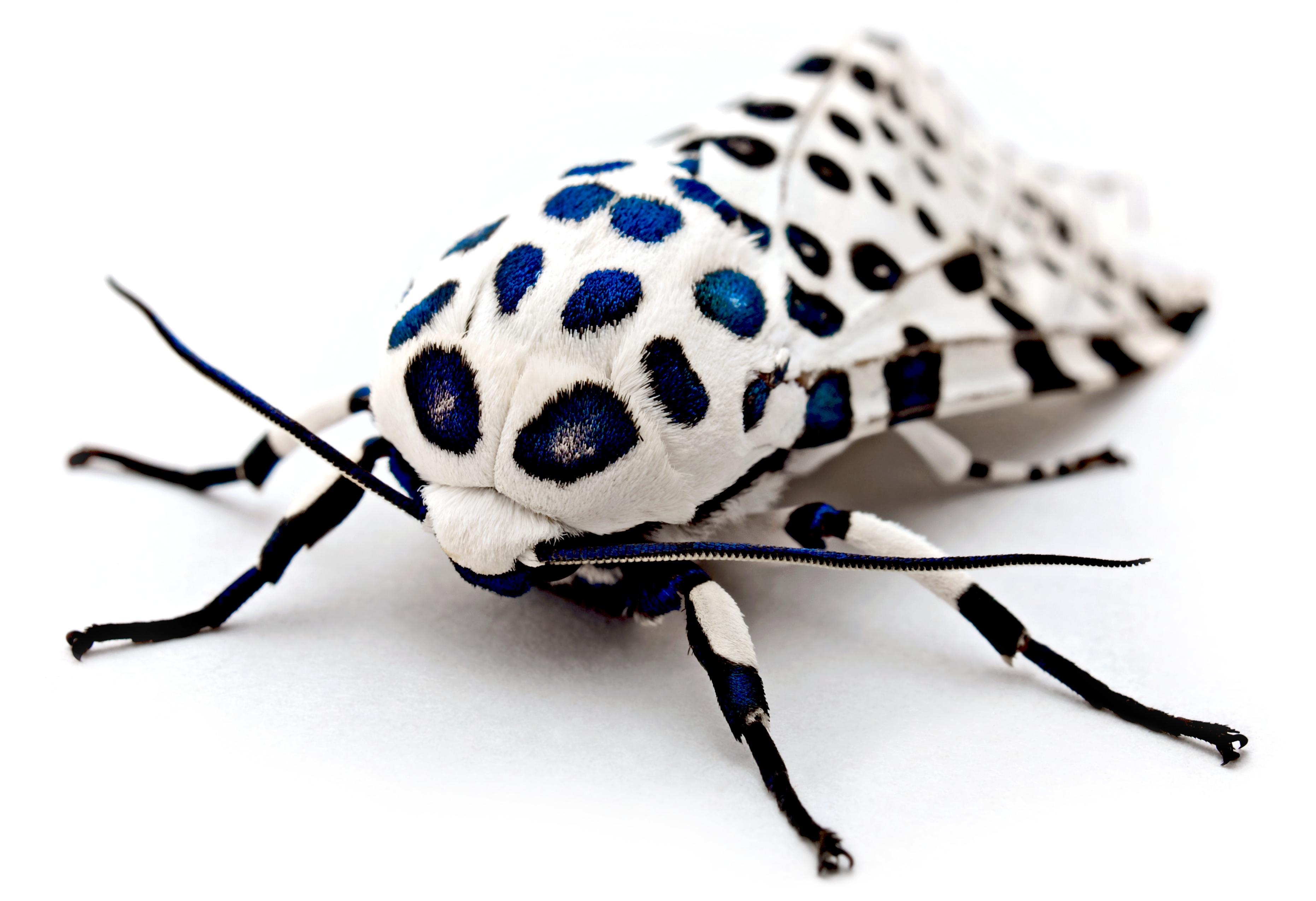 bugs screensaver