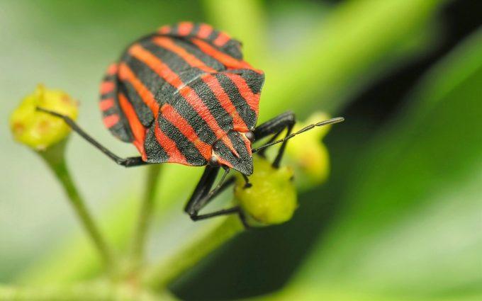 bugs wallpaper