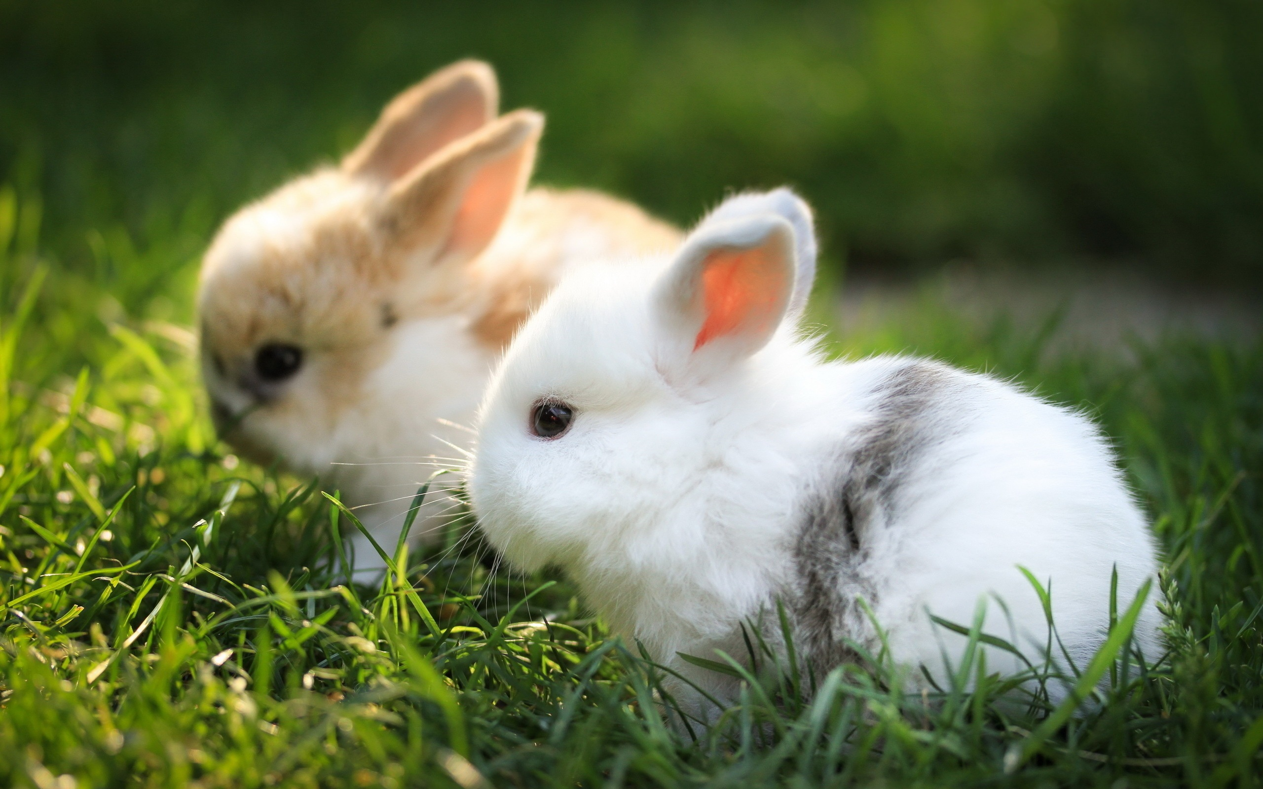 bunnies images