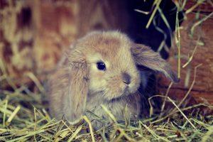 bunny hd