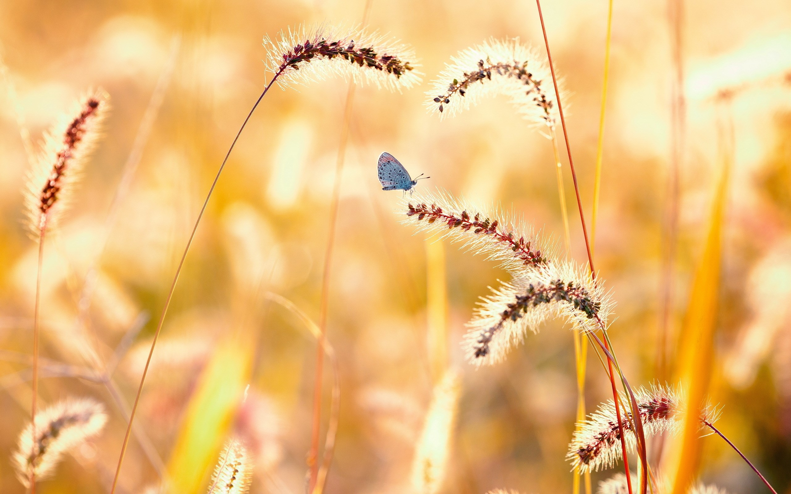 butterfly pictures 1080p