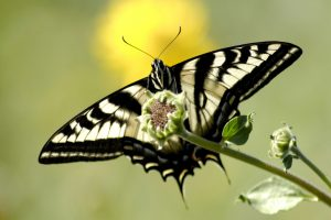 butterfly pictures cool