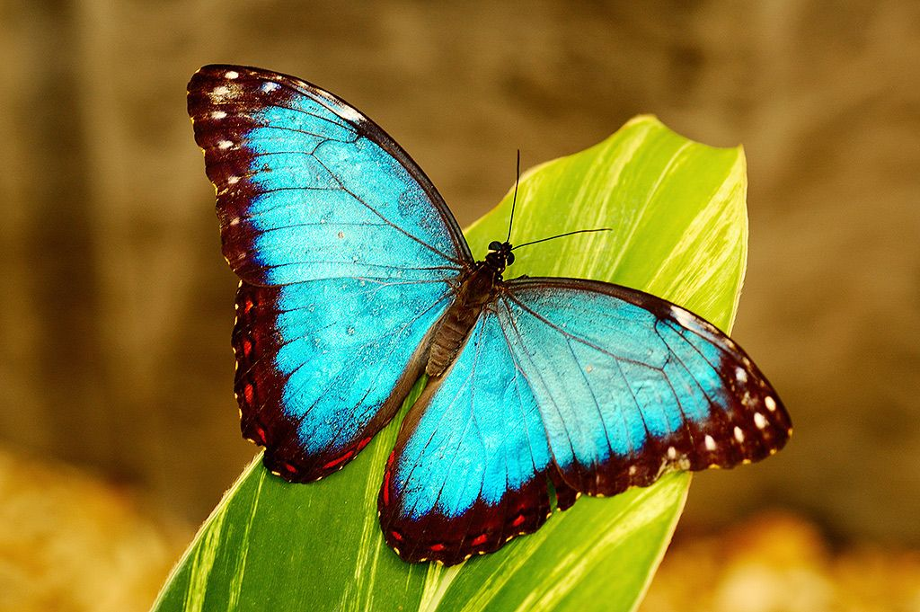 butterfly pictures hd