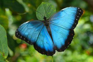 butterfly wallpaper download free