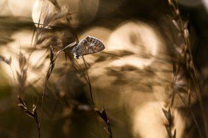 butterfly wallpaper image
