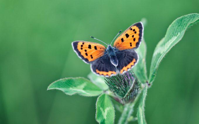 butterfly wallpaper in hd