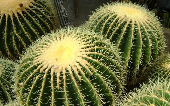 cactus background hd desktop wallpapers 4k hd