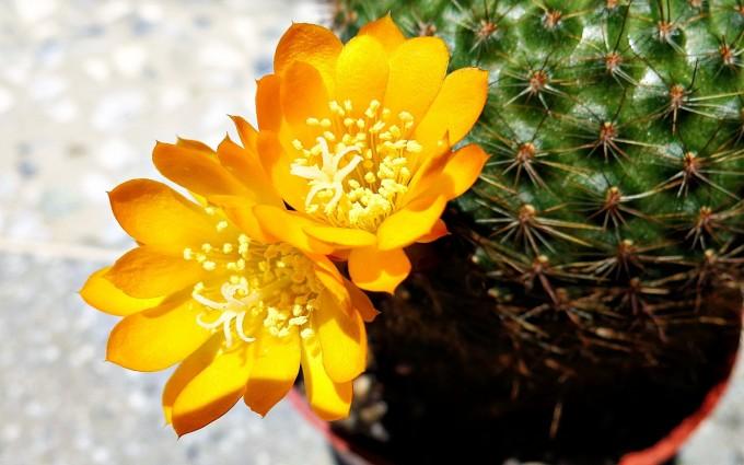 cactus pictures