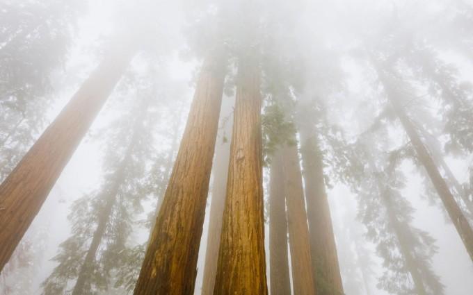 california picture