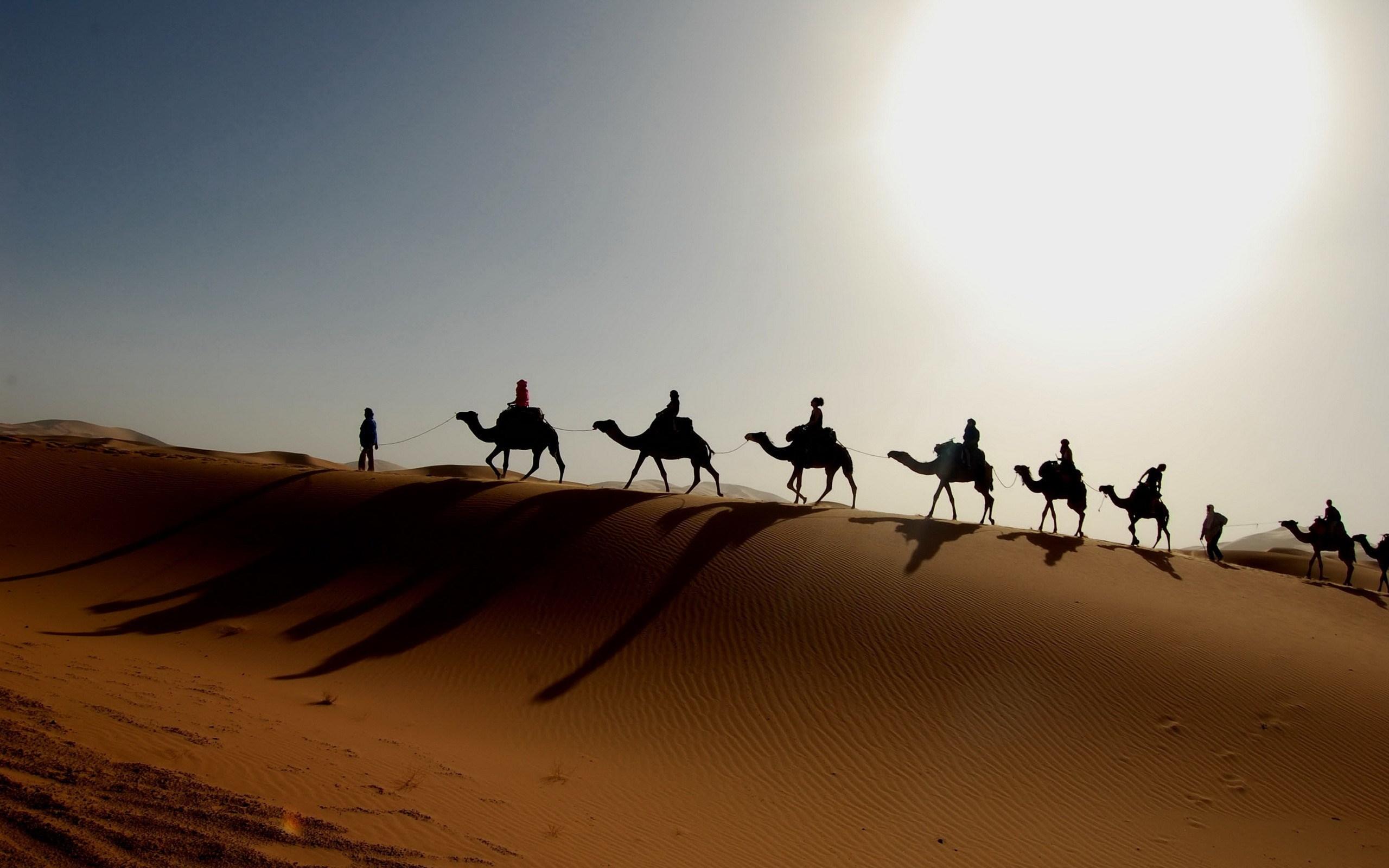camels sahara desert