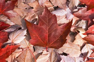 canada nature flag wallpaper