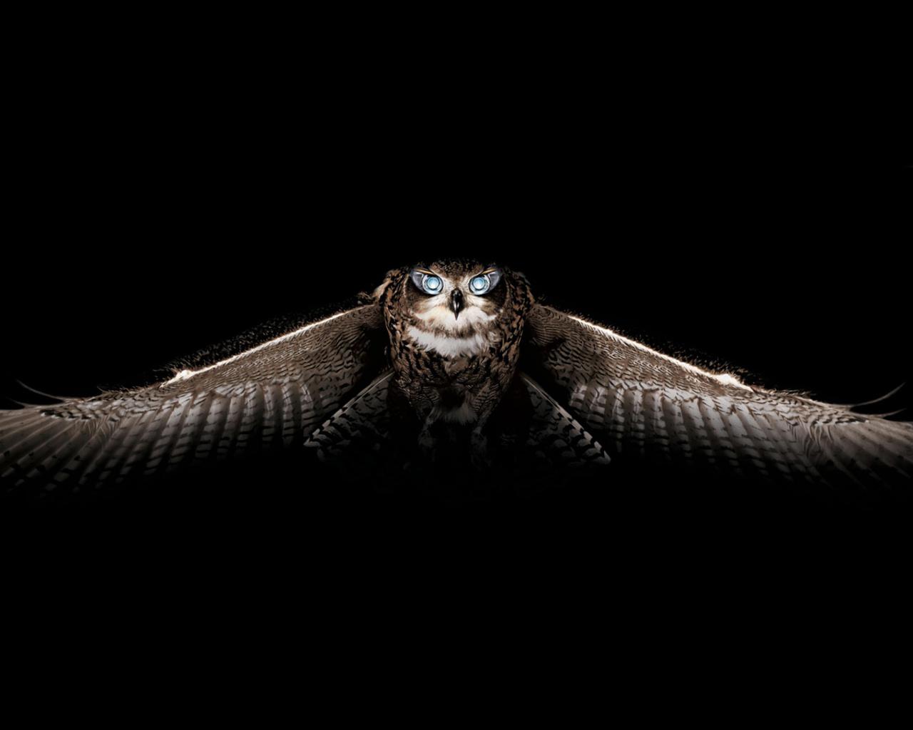 cartoon owl desktop wallpaper