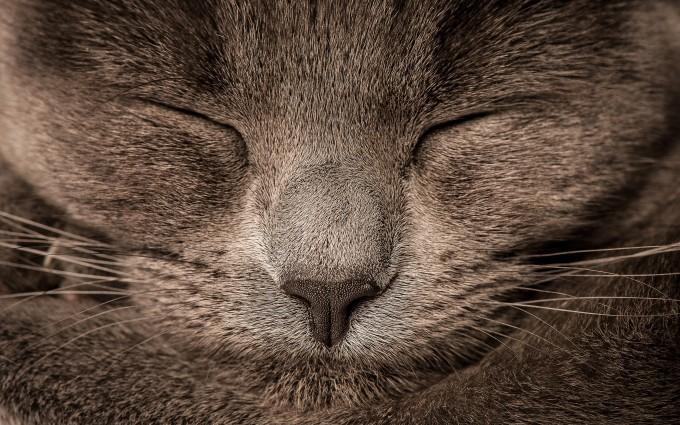cat animation wallpaper
