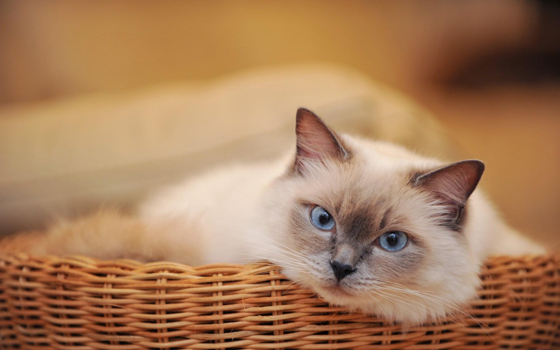 cat basket