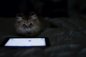cat desktop backgrounds