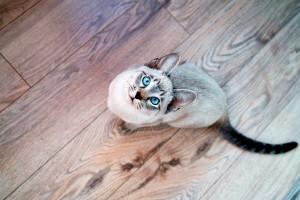 cat desktop wallpaper